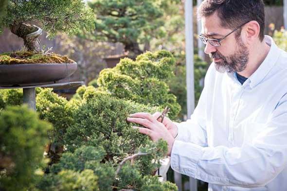 José Manuel Blázquez, profesor de arbol bonsái, suiseki y jardinería japonesa