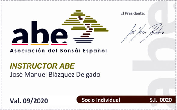 José Manuel Blázquez, instructor de la Asociacion del bonsái Espanol (ABE)