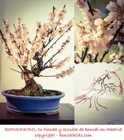 diseño de un prunus mume de flor rosa claro