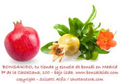 flores y fruto de granado bonsai