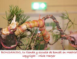 pino sylvestris alambrado y enrafiado
