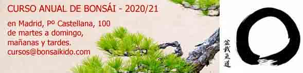 Curso de bonsai (arbol) en Madrid