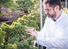 Bonsai: árboles y paisajes en maceta